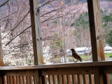 <h5>First Signs of Spring!</h5><p>The robin marks the first signs of spring. 																																																																				</p>