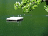 <h5>Swim with the duckies!</h5><p>Even the ducks like our swim up dock! 																																																																				</p>